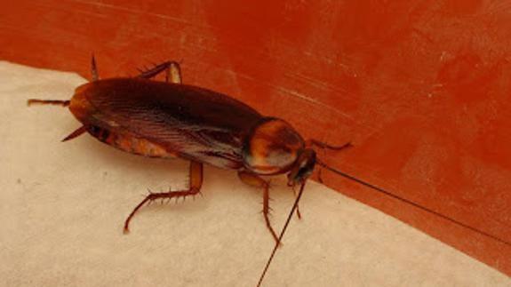 Eliminar plagas de cucarachas rápidamente