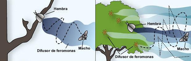 Las feromonas y el control de plagas