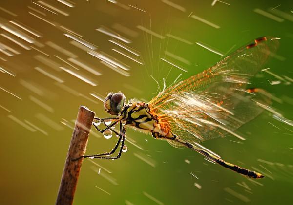 ¿Cómo afecta la lluvia a las plagas?