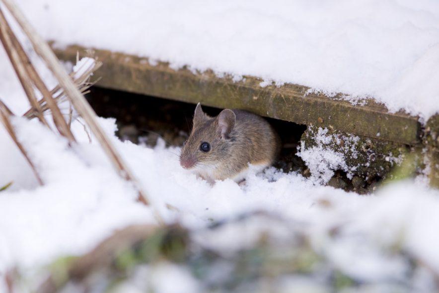¿En que afecta el clima de invierno a las plagas?