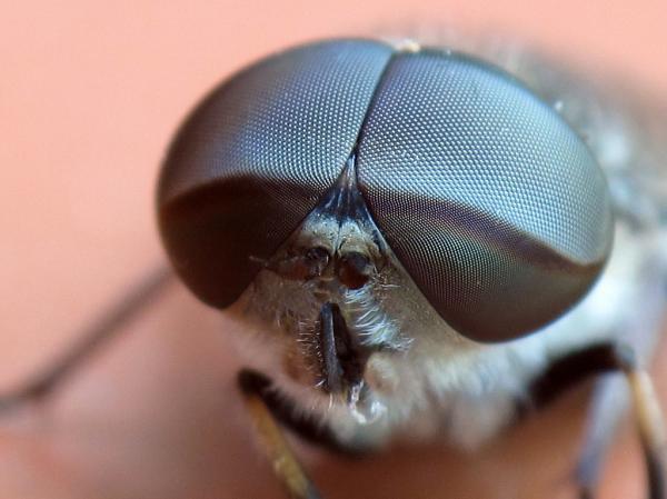 ¿Las moscas tienen visión de 360º?