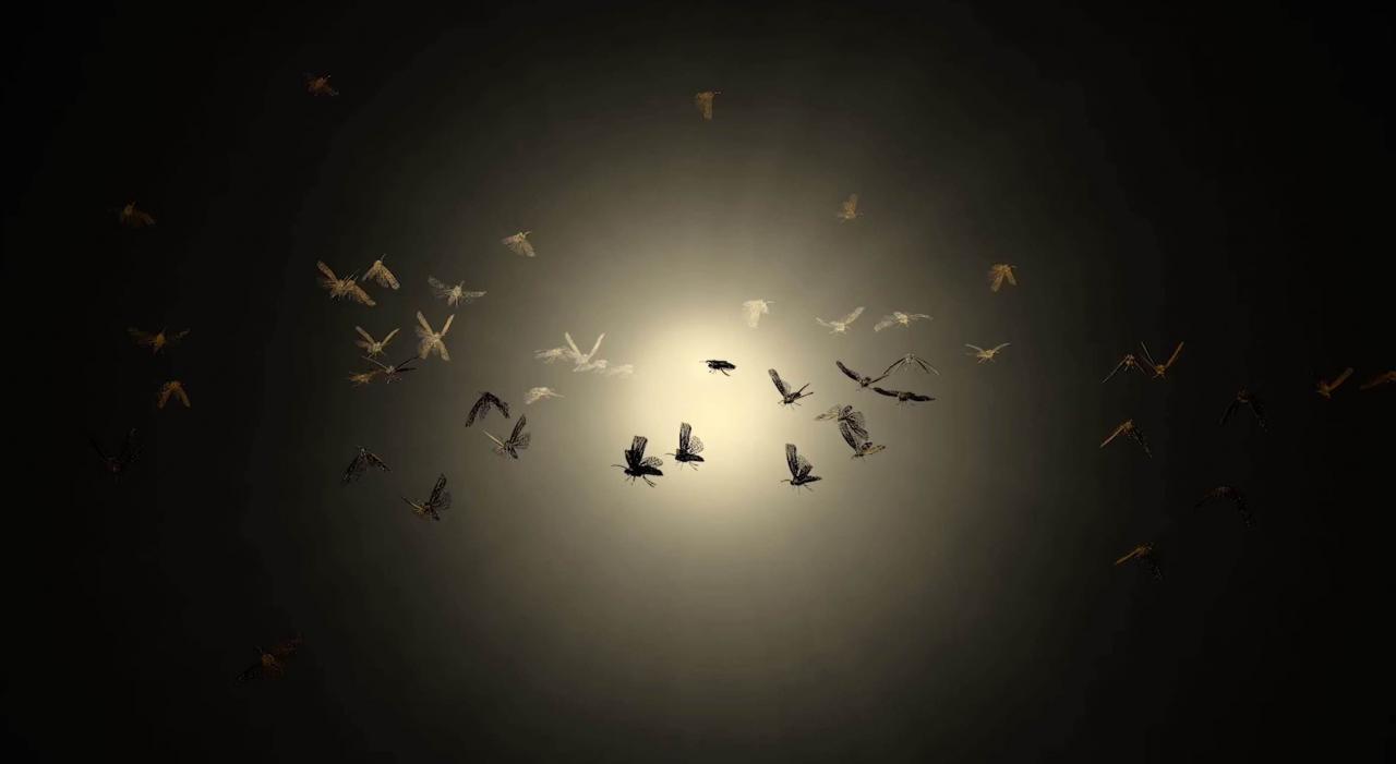 ¿Porqué las polillas se sienten atraidas por la luz?