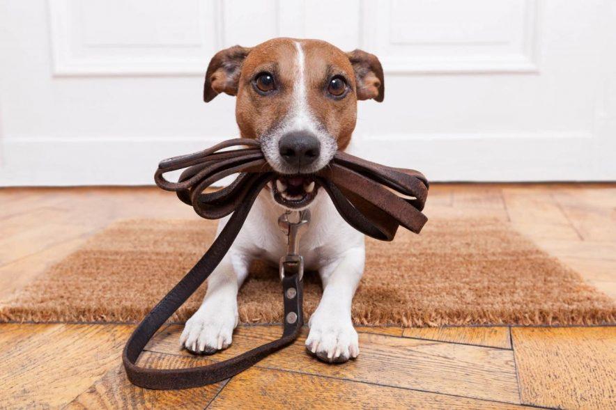 ¿Qué plagas pueden afectar a mis mascotas?