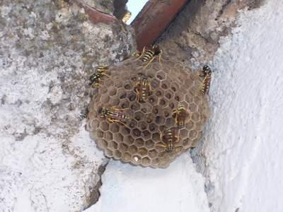 Consejos para evitar las picaduras de avispas y abejas
