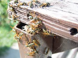 Consejos para mantener alejados a los insectos esta primavera