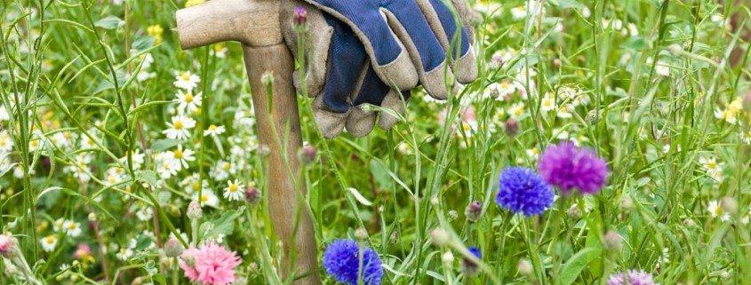 Control efectivo de garrapatas en tu propio jardin
