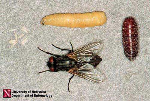 Plagas de moscas en casa ¿Cómo eliminarlas?