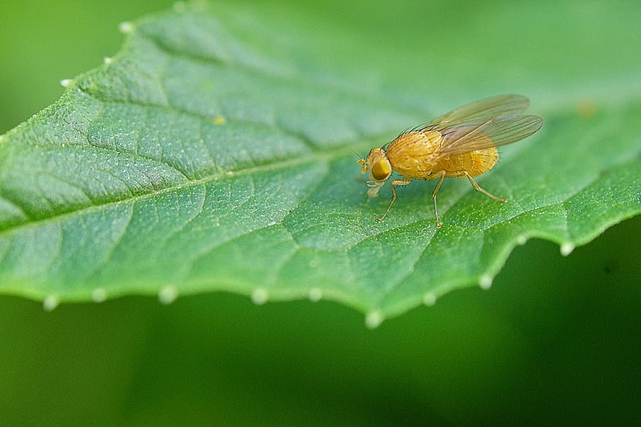 prevencion-y-control-de-moscas-de-la-fruta