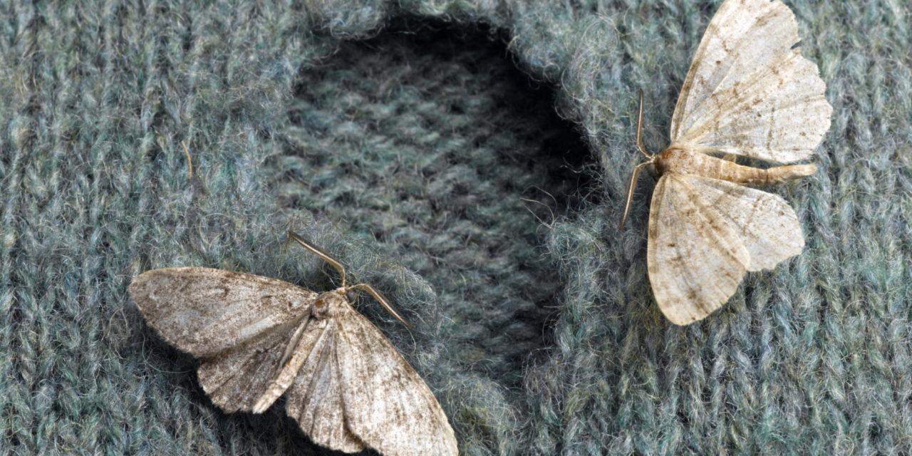 Prevenir y combatir a las polillas en invierno