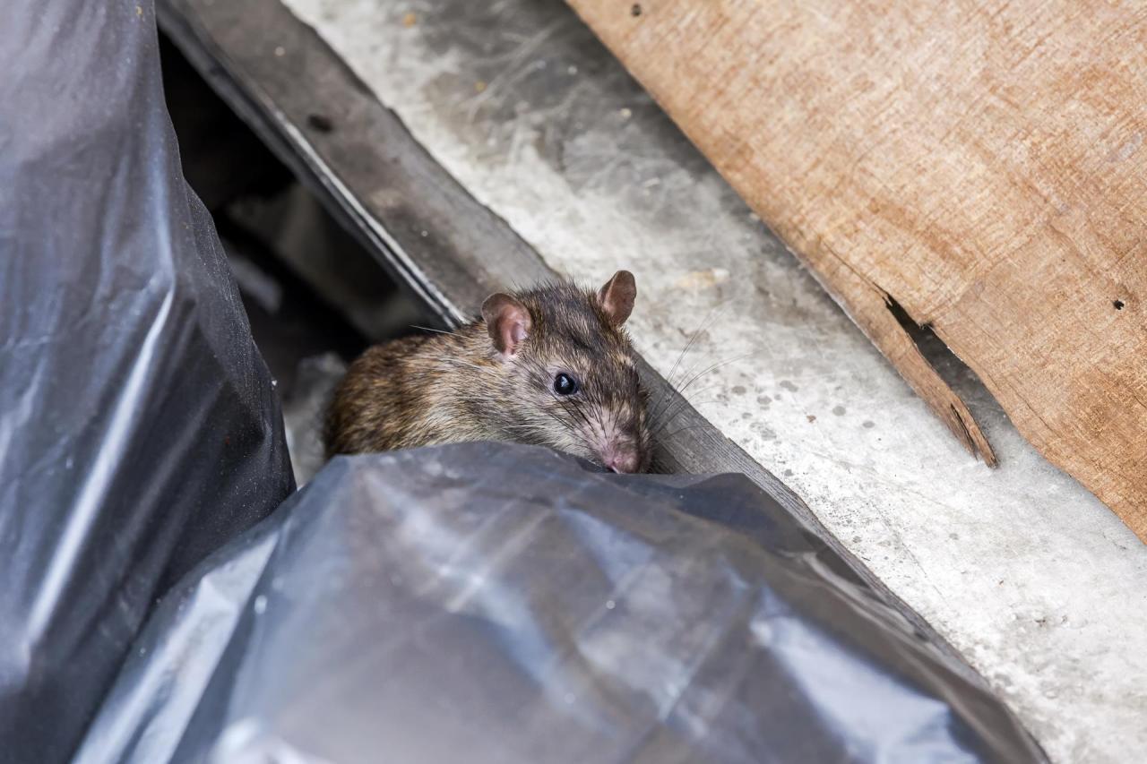 protege-tu-garaje-de-los-roedores-1