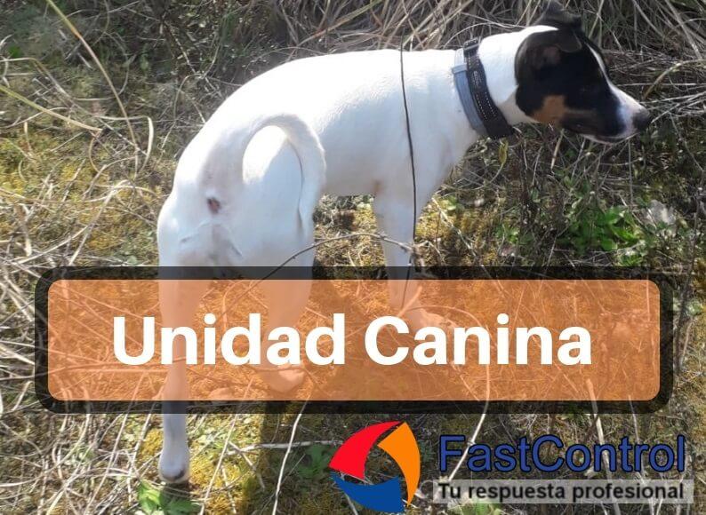 Unidad Canina: Detección de plagas con perros